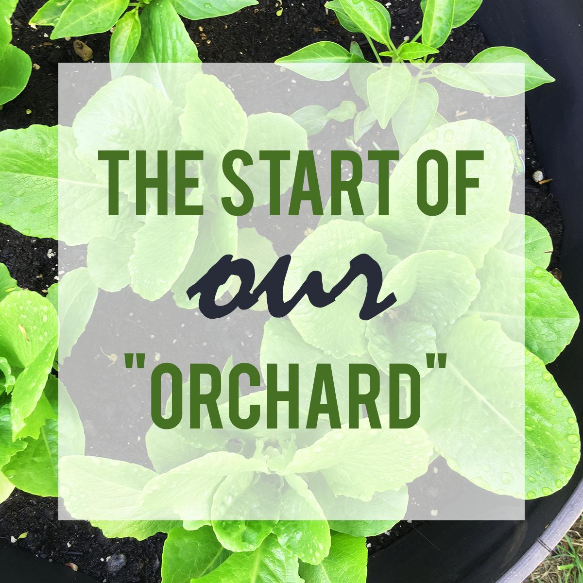 planting michigan organic garden